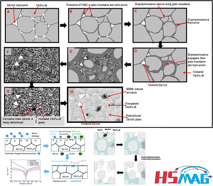 Basic Composition and Microstructure of Sintered NdFeB Magnet (neodymium-iron-boron)